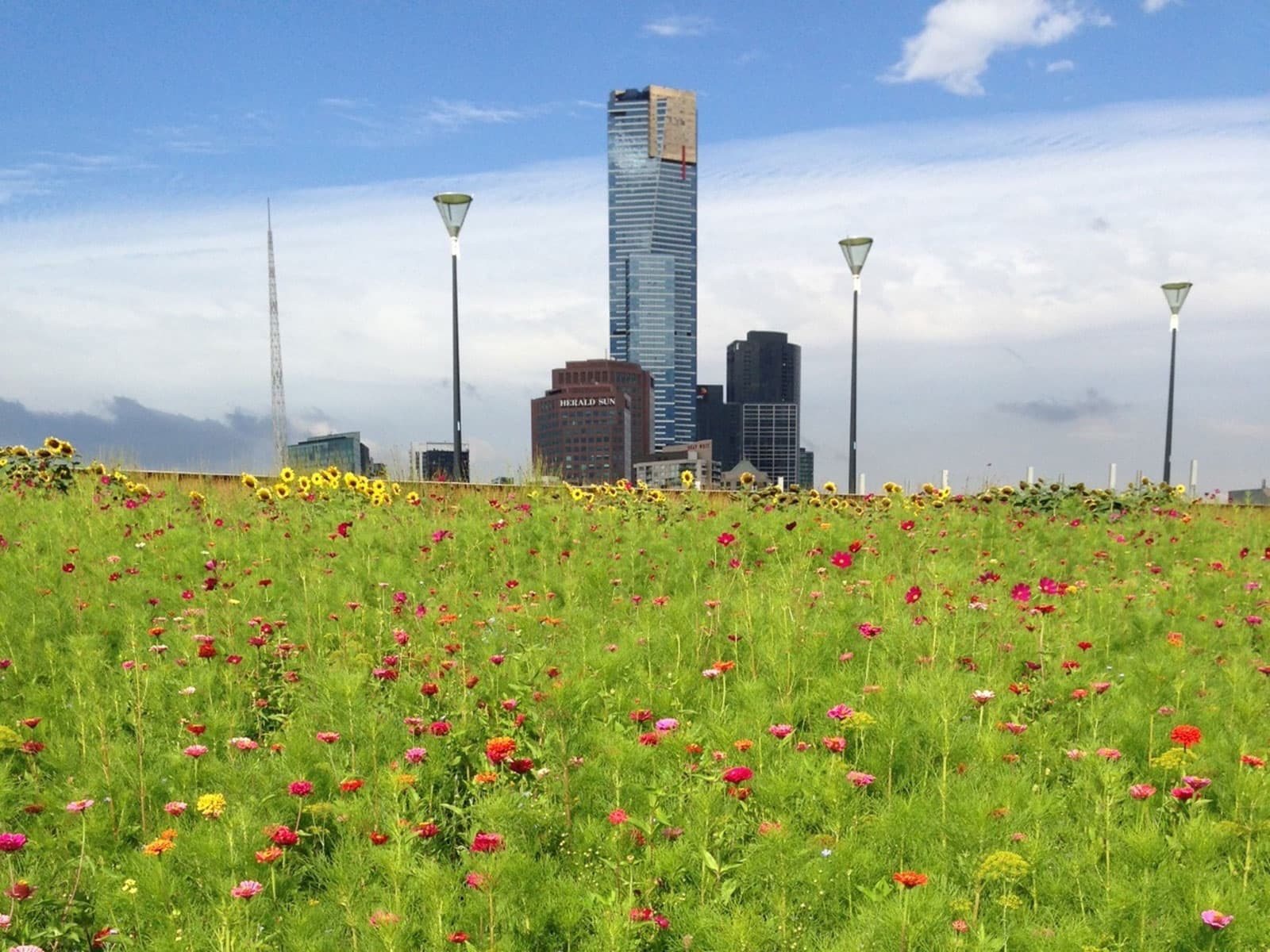 GI Assessment Tool Green Roof Image via City of Melbourne